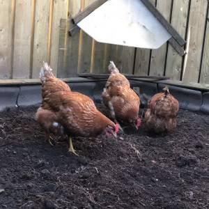 Feiten over de vogelgriep
