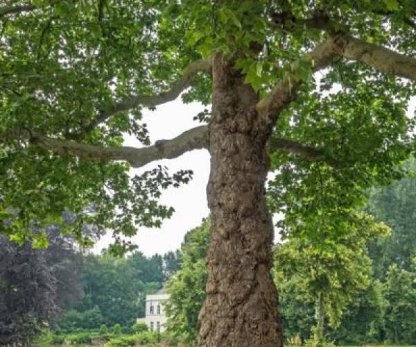 Alle bomen van Meierijstad op een rijtje