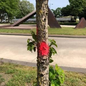 Rode stip op een boom? Kijk op de digitale kaart waarom die gekapt wordt