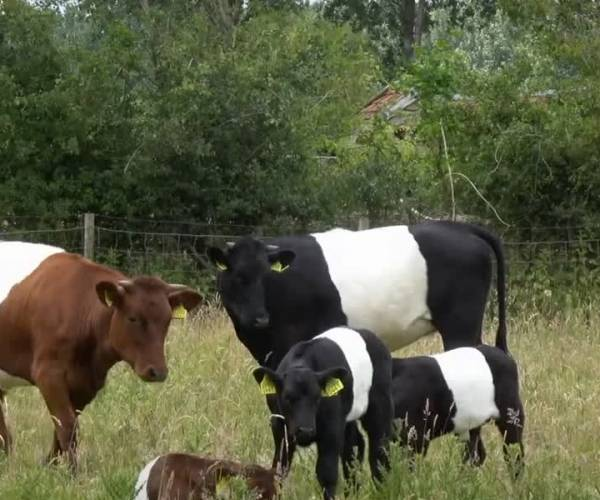 Geen boerenprotest bij Friesland Campina