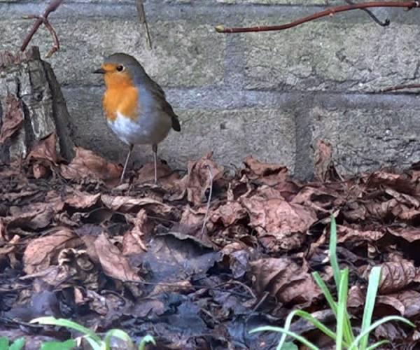 Nationale tuinvogeltelling: 'Zo weet je hoe het er met de biodiversiteit voor staat'