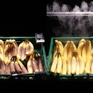 Europese prijs voor mistsysteem op de fruitafdeling van de super