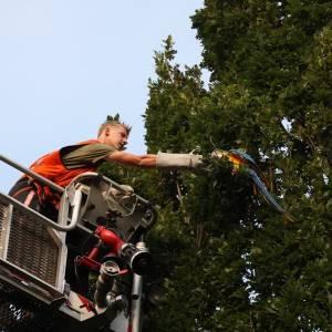 Brandweer Schijndel redt ara uit boom