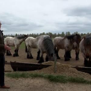 Wim van Lankveld neemt 'Belicht' mee op trekpaardentocht