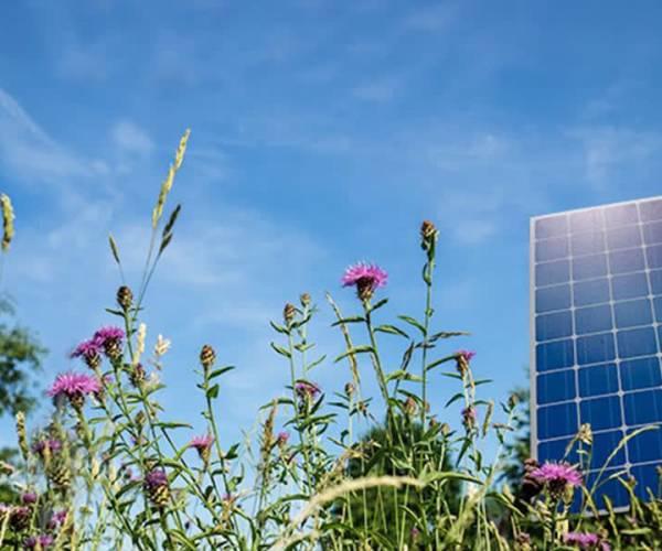 Voorlopig geen extra zonneparken in Meierijstad