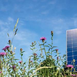 Dorpsraad Olland vreest 30 hectare zonnepanelen