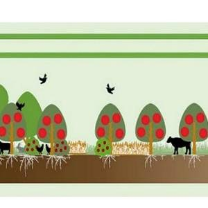 Populierenwerkgroep Het Groene Woud ondersteunt plantactie.