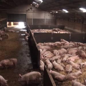Boeren en gemeente botsen over stankoverlast