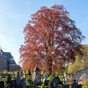 'Boetes illegale bomenkap in bomenfonds'